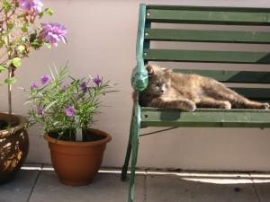 Willow the cat enjoys the sun